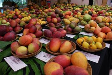 Mango Madness at Fairchild